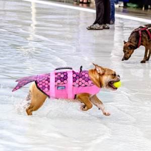 dog life saver preserver