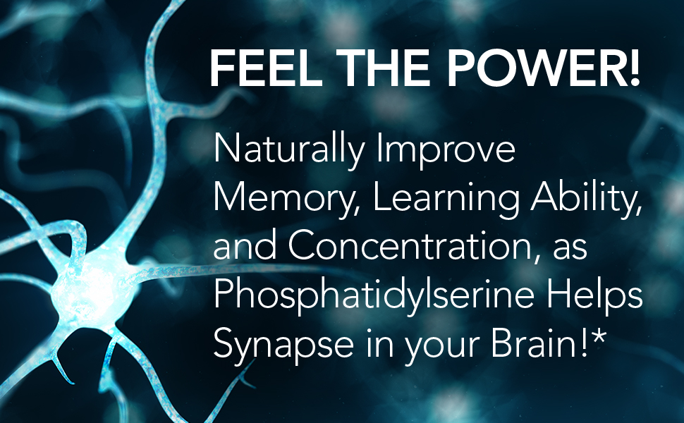 concentration, nootropic, synapse, learning, memory, phosphatidylserine