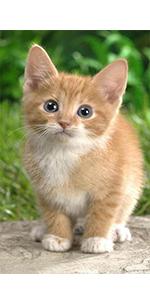 cats collars