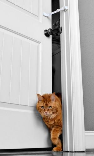 Amazon Com Door Buddy Baby Proof Door Lock With