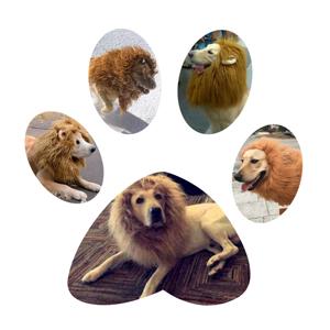 dogs lion mane