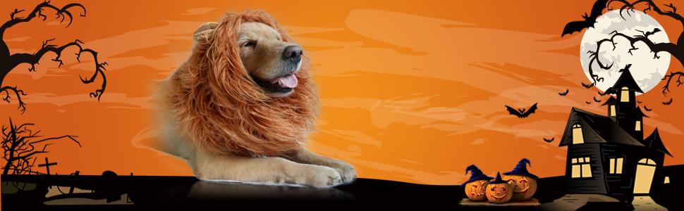 Lion Mane Dog
