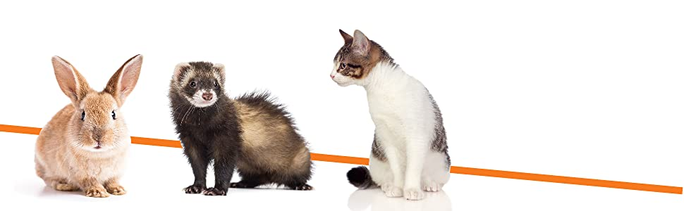 great for small pets like rabbits, ferrets, cats, and small dogs