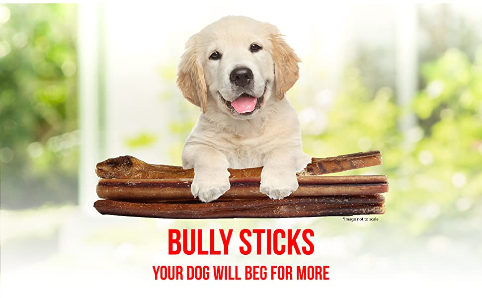 jumbo bully sticks downtown pet supply