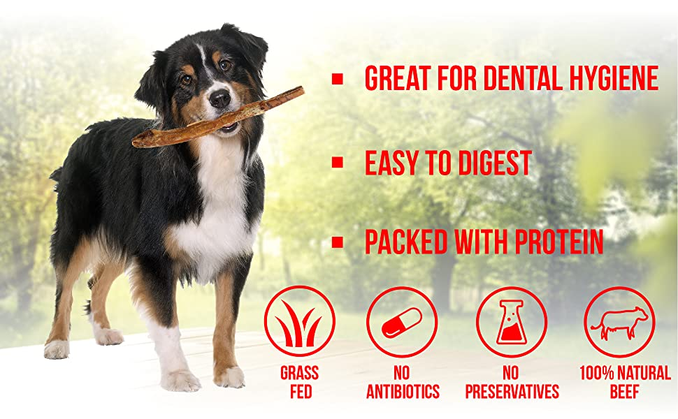 great for dental hygiene, easy digest, packed with protein jumbo bully stick