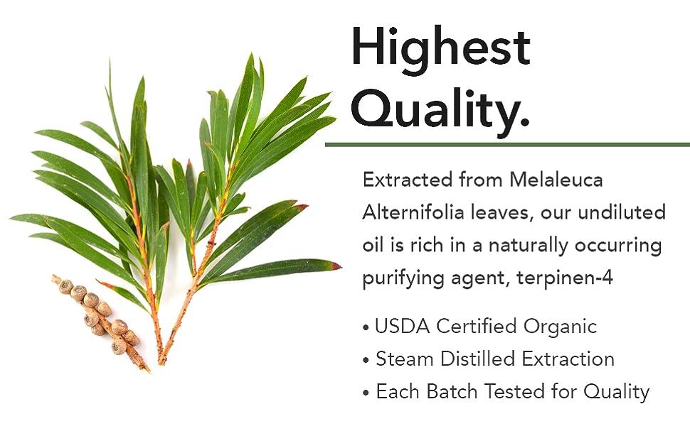 pure tea tree oil acne mint oil tea tree oil spray