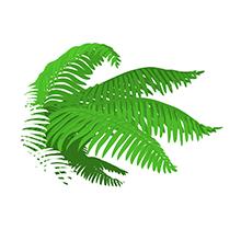 polypodium skin integrity tone health dna function