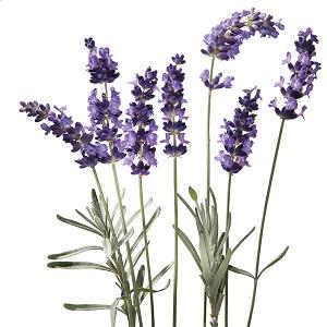 Kneipp Lavender Essential Oil