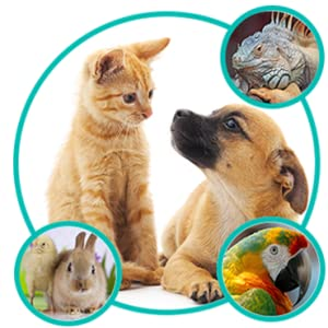 Animal Care, Cats, Dogs, Birds, Small Animals