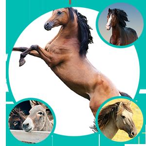 Horses Care, Animal Care