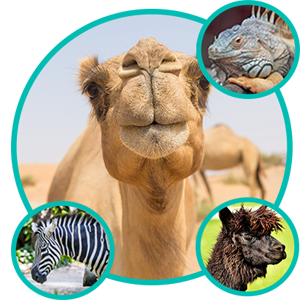 Exotic Animal Care, Camel, Lama, Zebra, Reptiles