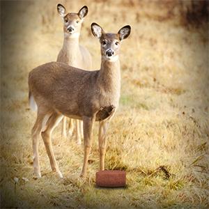How long do deer licks last can not