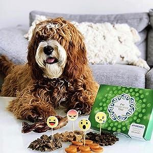 5Strands Affordable Testing, 5strands, Food, Health, Pet, Dog, Cat, Allergy, Intolerance, nutrition