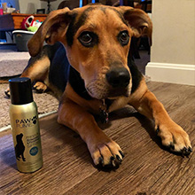 Pawfume, grooming spray, finishing spray, dog perfume, grooming product, dog cologne, hypoallergenic