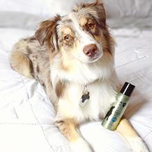 Pawfume, grooming spray, dog perfume, dog cologne, dry shampoo for dogs, finishing spray, dog groom