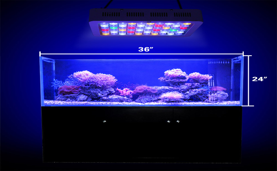 ... several photosynthetic organisms (plants or corals) there is usually little need to invest in anything more than a standard aquarium lighting which ... : coral lighting - www.canuckmediamonitor.org