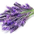 lavender ingredient benefits