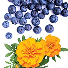 bilberry and marigold