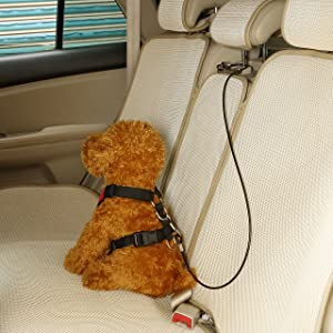 Connect With Auto Headrest