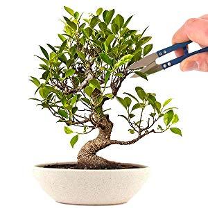 Amazon Com Grow Your Own Bonsai Kit Easily Grow 4 Types Of Bonsai Trees With Our Complete Beginner Friendly Bonsai Seeds Starter Kit Unique Seed Kit Gift Idea Garden Outdoor