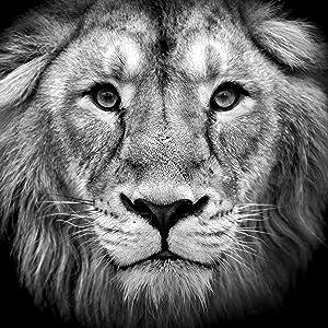 CatGuru Lion