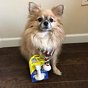 Good dog showing Bullibone Brusher