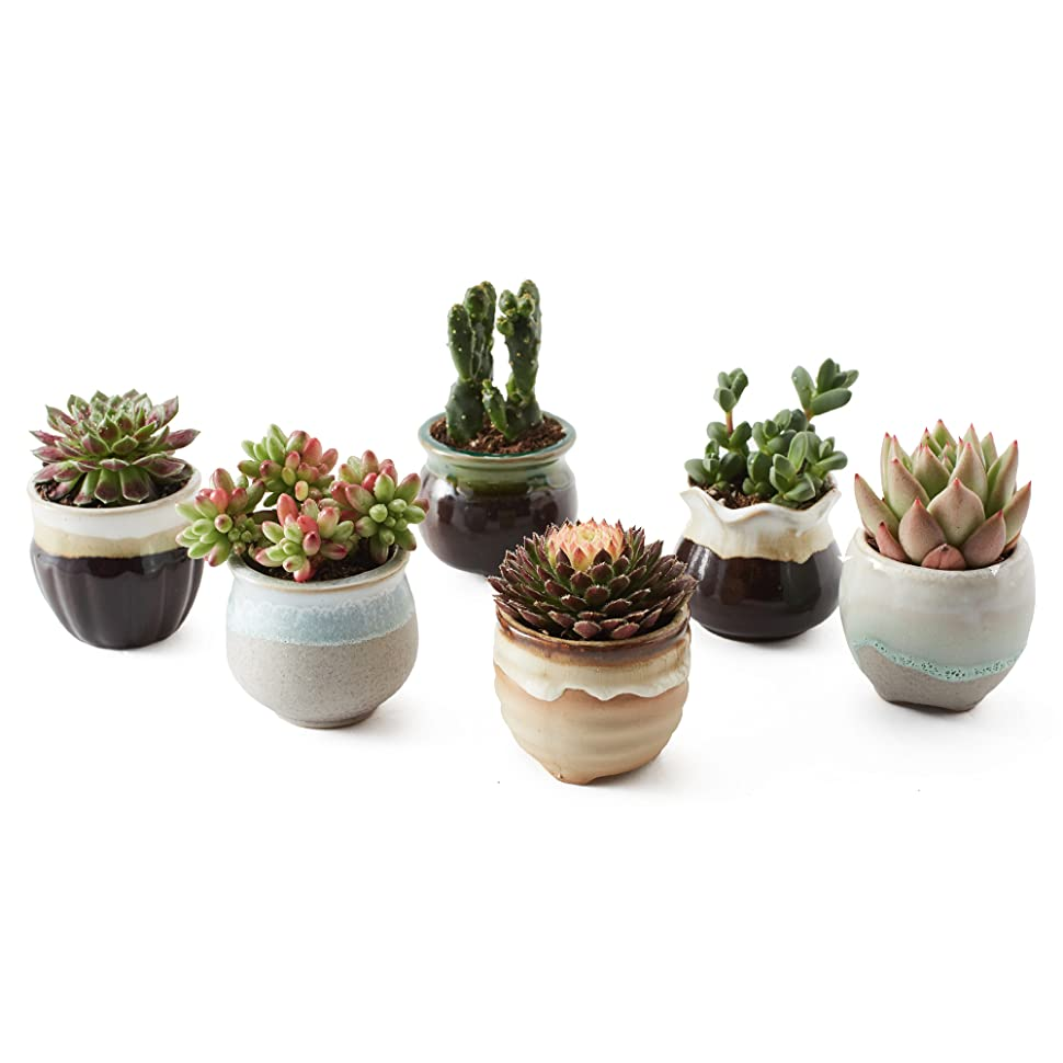 Sun e 6 in set 2 5 inch ceramic flowing glaze for 6 ceramic flower pots