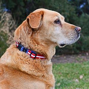 American Flag Dog Collar Retriever