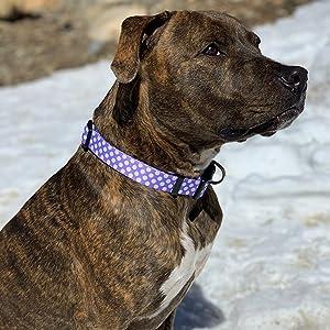 Purple Polka Dot Dog Collar