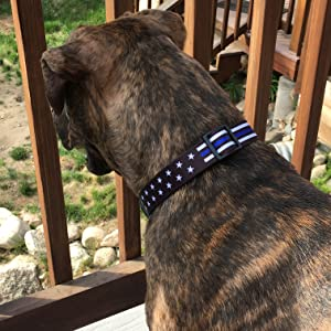 Thin Blue Line Stars Collar 3