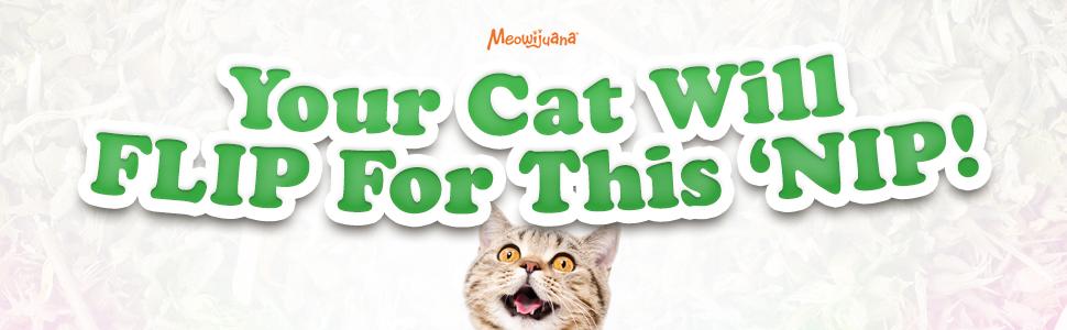 catnip, feline, kitty, cat, nip, activity, fun, unique, meowijuana, cat weed, cat crack, cat fun,