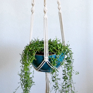 The 4mm cotton cord is great for making plant hangers