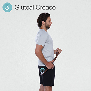 Gluteal Crease