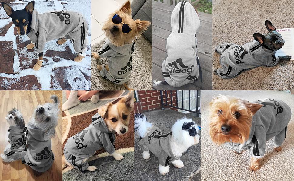 40a451ace Amazon.com : Scheppend Original Adidog Pet Clothes for Dog Cat Puppy ...