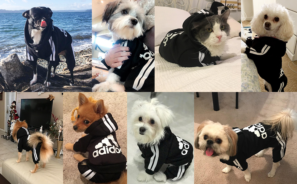 Pictures shown(pet hoodies) by the buyers