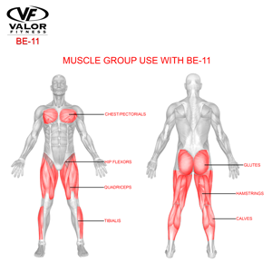 Muscle Group BE-11