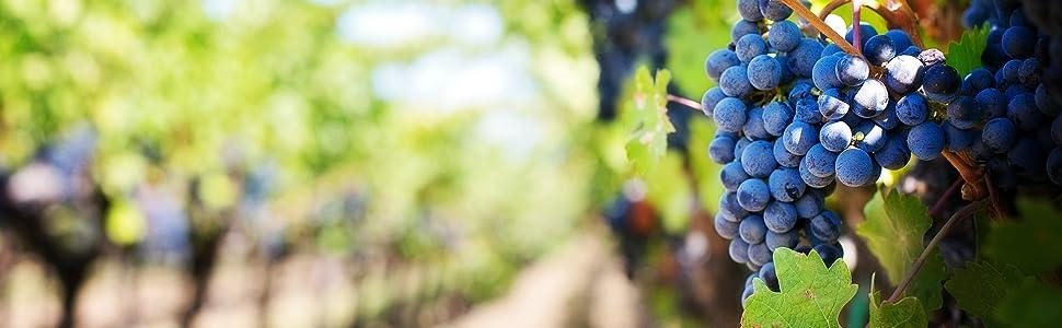 Natural Source Grapes Antioxidant