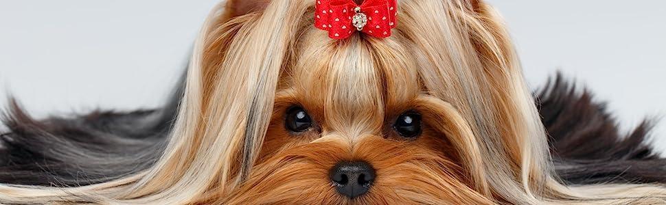 dog grooming scissors shears pet cat thinning hair cut long short home tool profesional nice best am