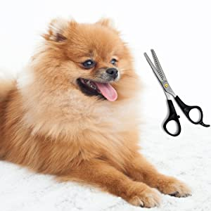 Image result for matted pomeranian