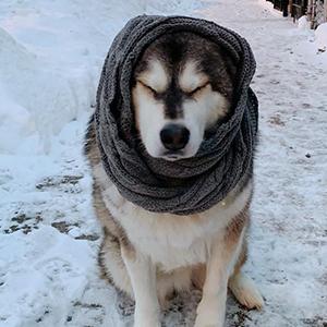 womens warm winter knit infinity scarf shawl wrap solid melange grey charcoal puppy dog husky