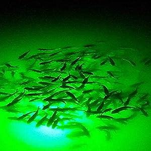 kilofly 4 Set Boat Dock Lure Bait Battery Powered Green Underwater Fishing Light