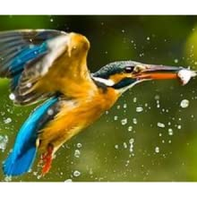 bird flying out of the water - panasonic, focus camera