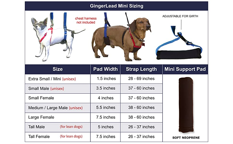 Penis support harness