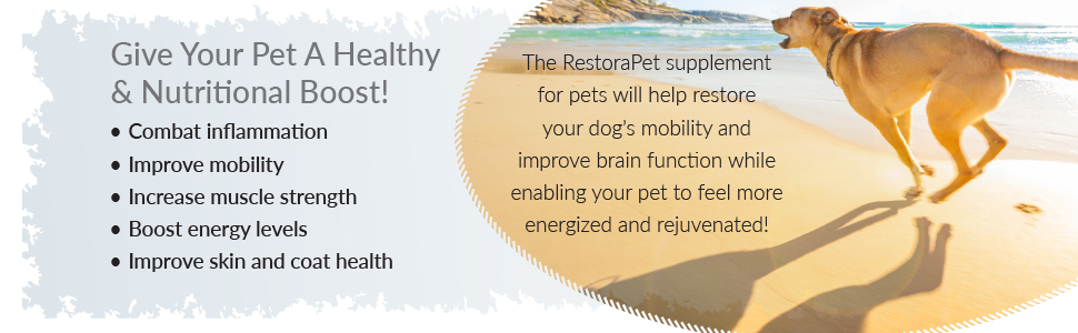 give your pet a healthy & nutrition boost