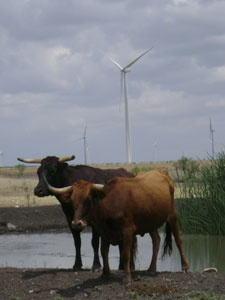 windpower1