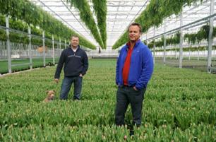 Coen Haakman and Nico Botman in the greenhouse at Fresh Tulips USA, LLC