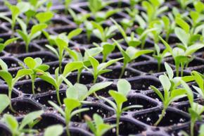 seedplants6