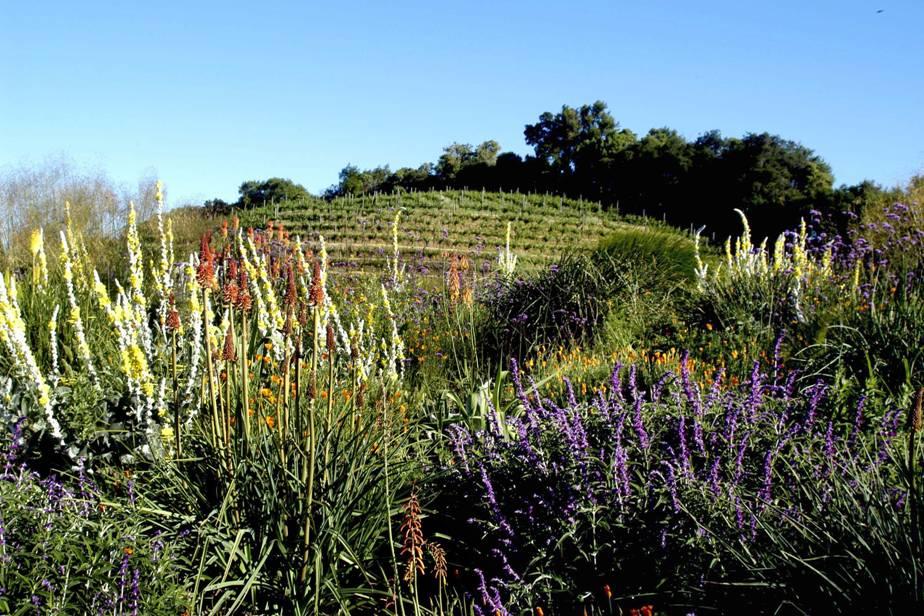 Benziger Family Winery, Glen Ellen CA