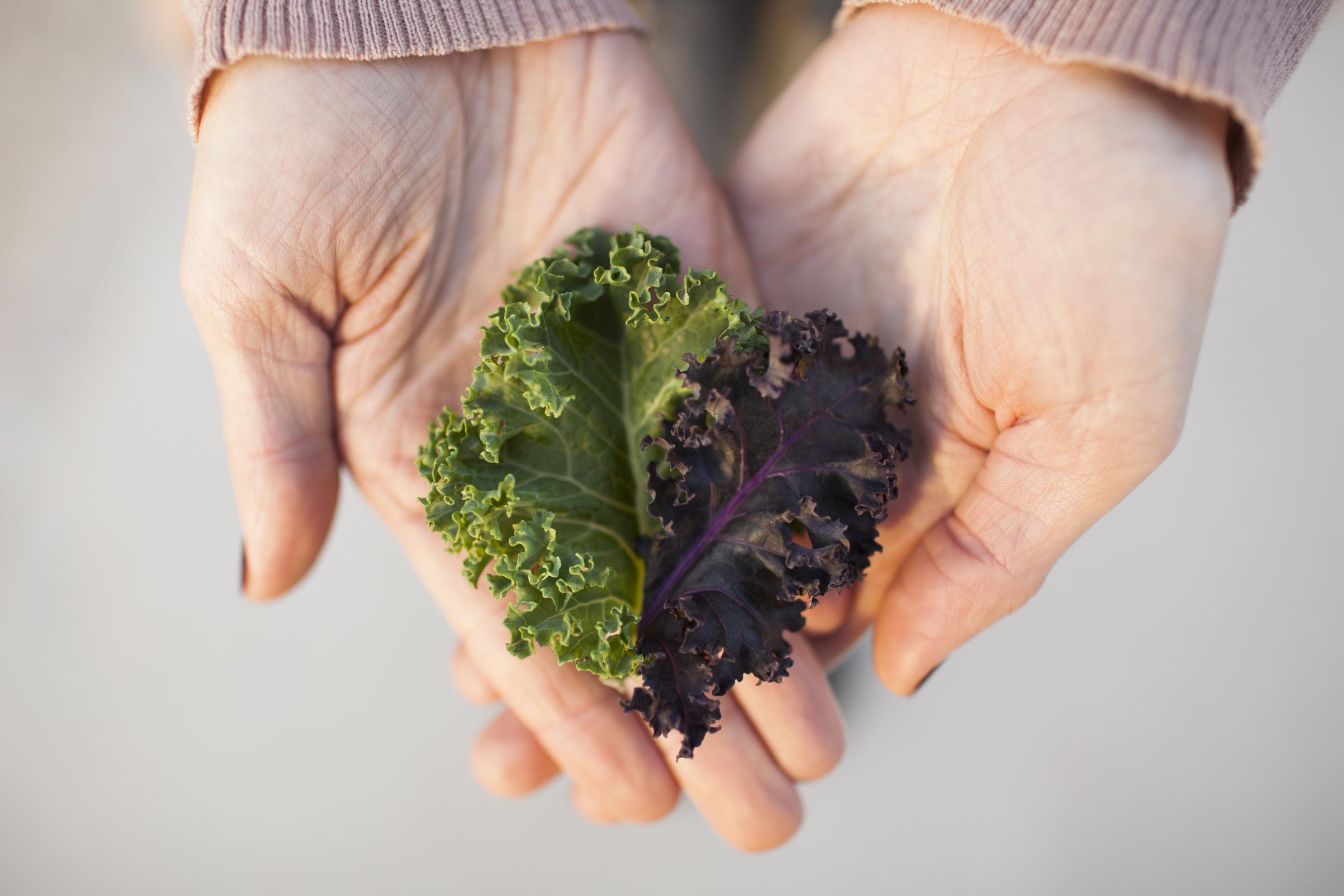 Kale in hands
