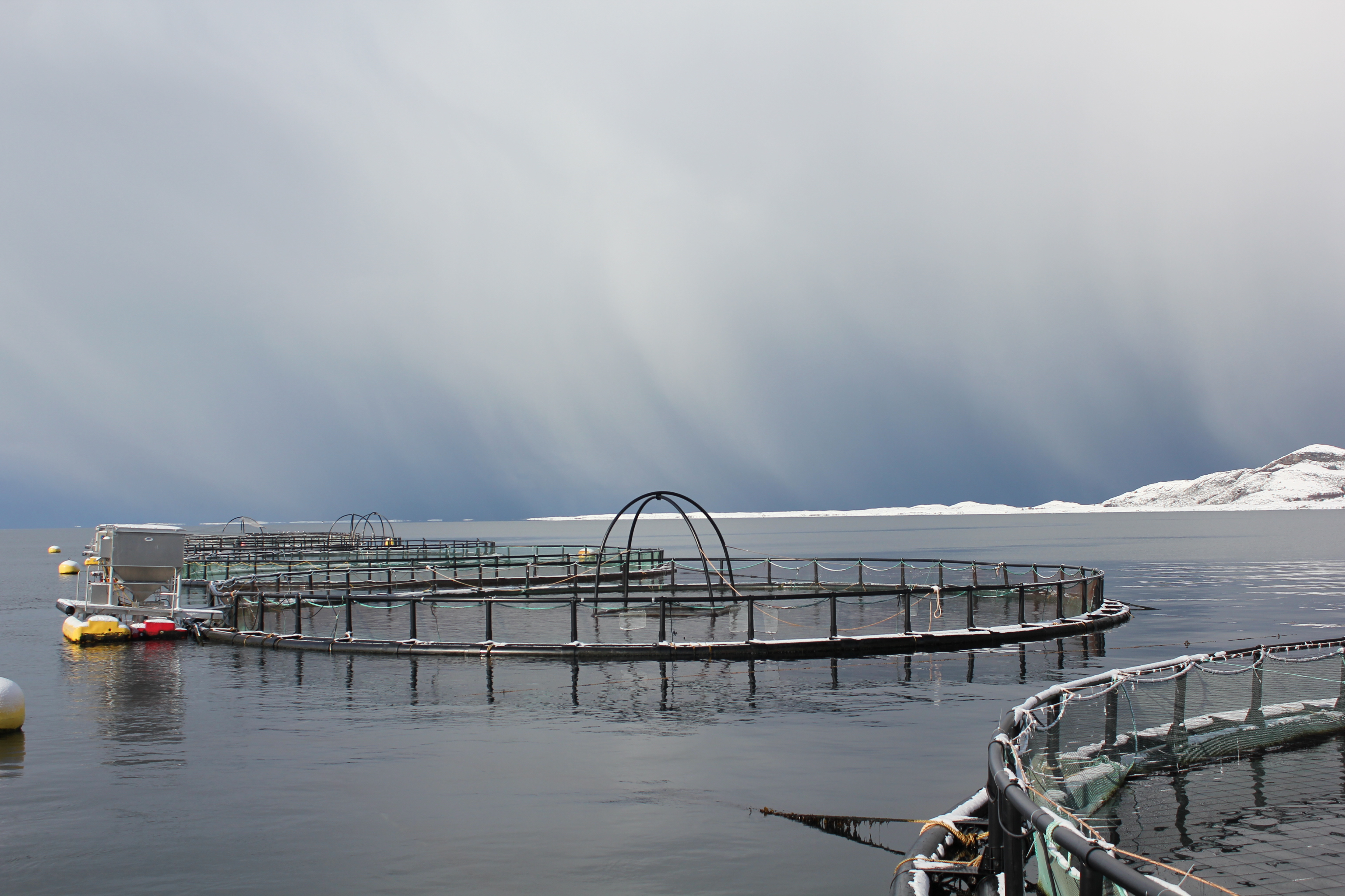 Kvarøy Fiskeoppdrett, Salmon Farm, Norway